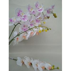 Орхидея латексная