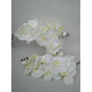 Орхидея крупная