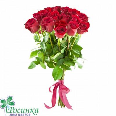 Букет №151 -  19 Роз Эквадор