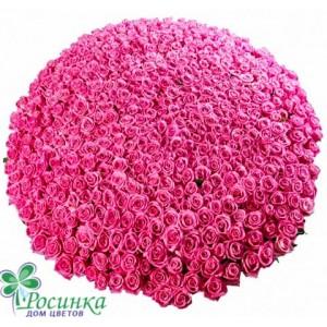 Розовое Облако 501 Роза