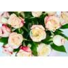 """Цветы в коробке """"21 Роза"""""""
