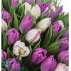 131 Тюльпан
