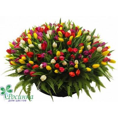 "Композиция ""Яркие краски"" 251 тюльпан"