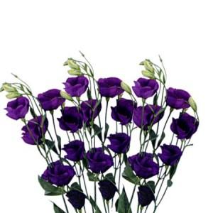 Эустома Фиолетовая