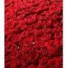 Композиция из 501 розы. Любовь