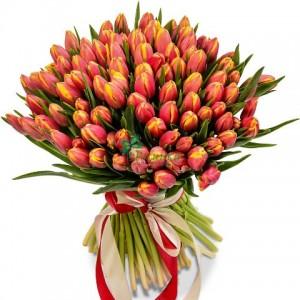 Тюльпаны 65 шт