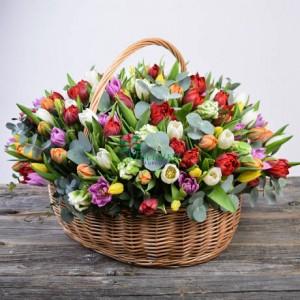 Тюльпаны 75 шт