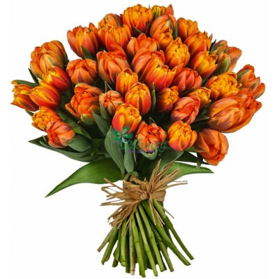 Тюльпаны - 51 шт