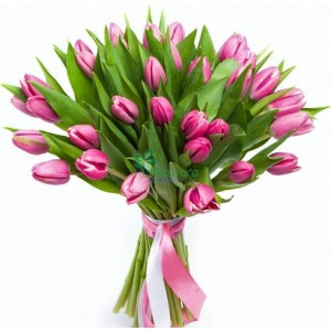 25 Тюльпанов