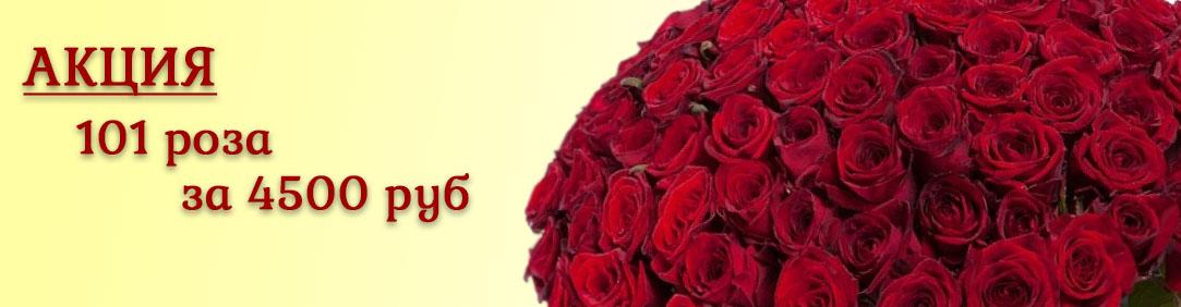 101 роза за 4500 р.